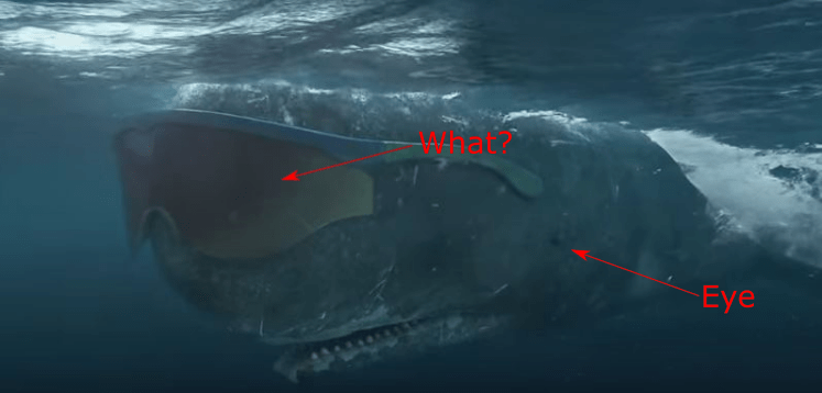 Figure 1. The actual location of a Sperm Whale's eye.