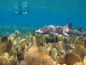 Our students learn to identify a variety of marine species from coral to shark species during their field work