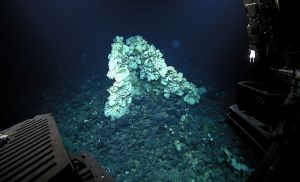 Large hexactinellid sponge found in Papahānaumokuākea Marine National Monument (Photo credit: NOAA's Office of Exploration and Research)