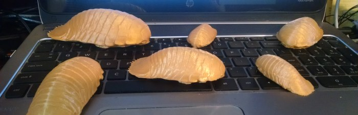 Giant Isopods! Photo by author.