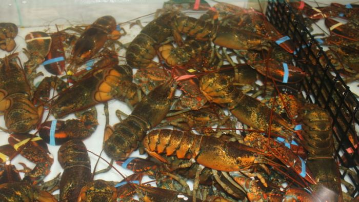 Lobster, not boiling.