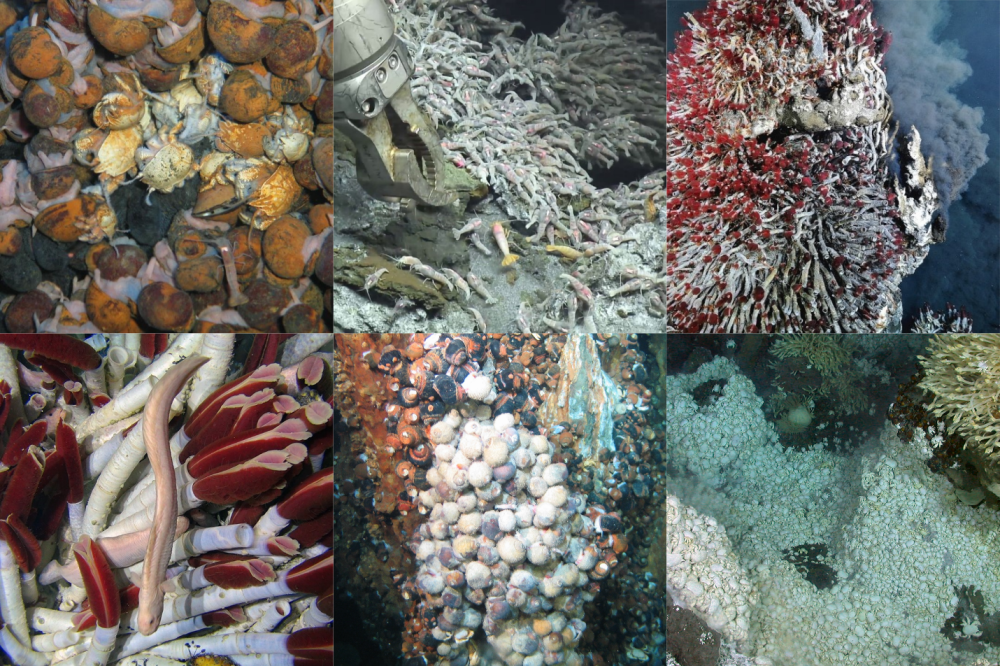 Biodiversity of hydrothermal vents from around the world. Top: Indian Ocean, Mid-Atlantic Ridge, Juan de Fuca Ridge. Bottom: East Pacific Rise, Southwest Pacific, Southern Ocean. Photo credits (top left to bottom right): University of Southampton; Woods Hole Oceanographic Institute; Ocean Networks Canada; Woods Hole Oceanographic Institute; Nautilus Minerals; University of Southampton.