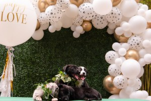 Boho chic dog wedding balloon garland