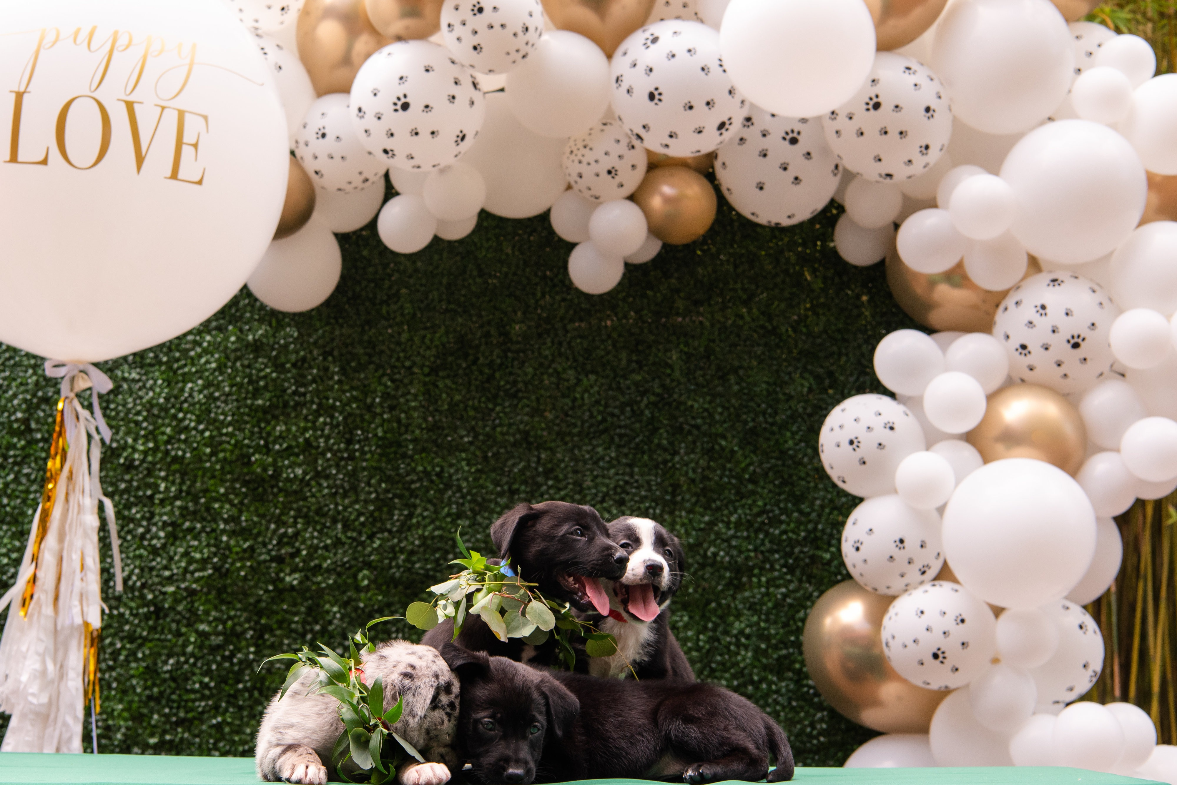 Boho chic dog wedding balloon garland