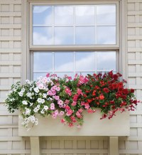 Signs of the Season: Summer Flowers