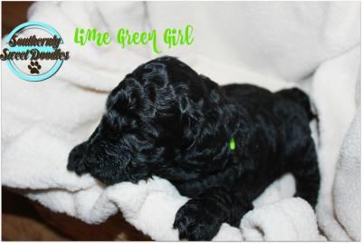 Lime Green Girl