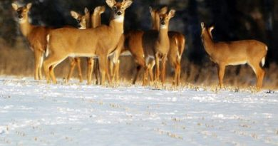 muzzleloader-deer