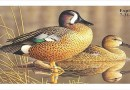 2021-2022 Migratory Game Bird Stamp Design Contest Now Open