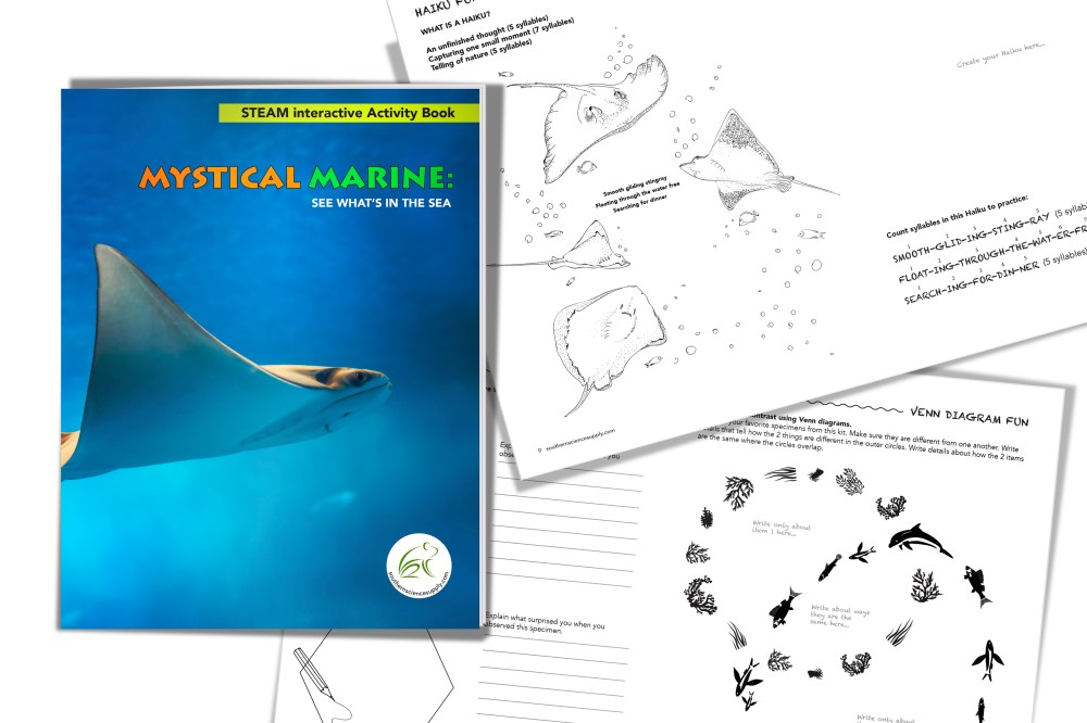 medium resolution of interactive steam activity book set