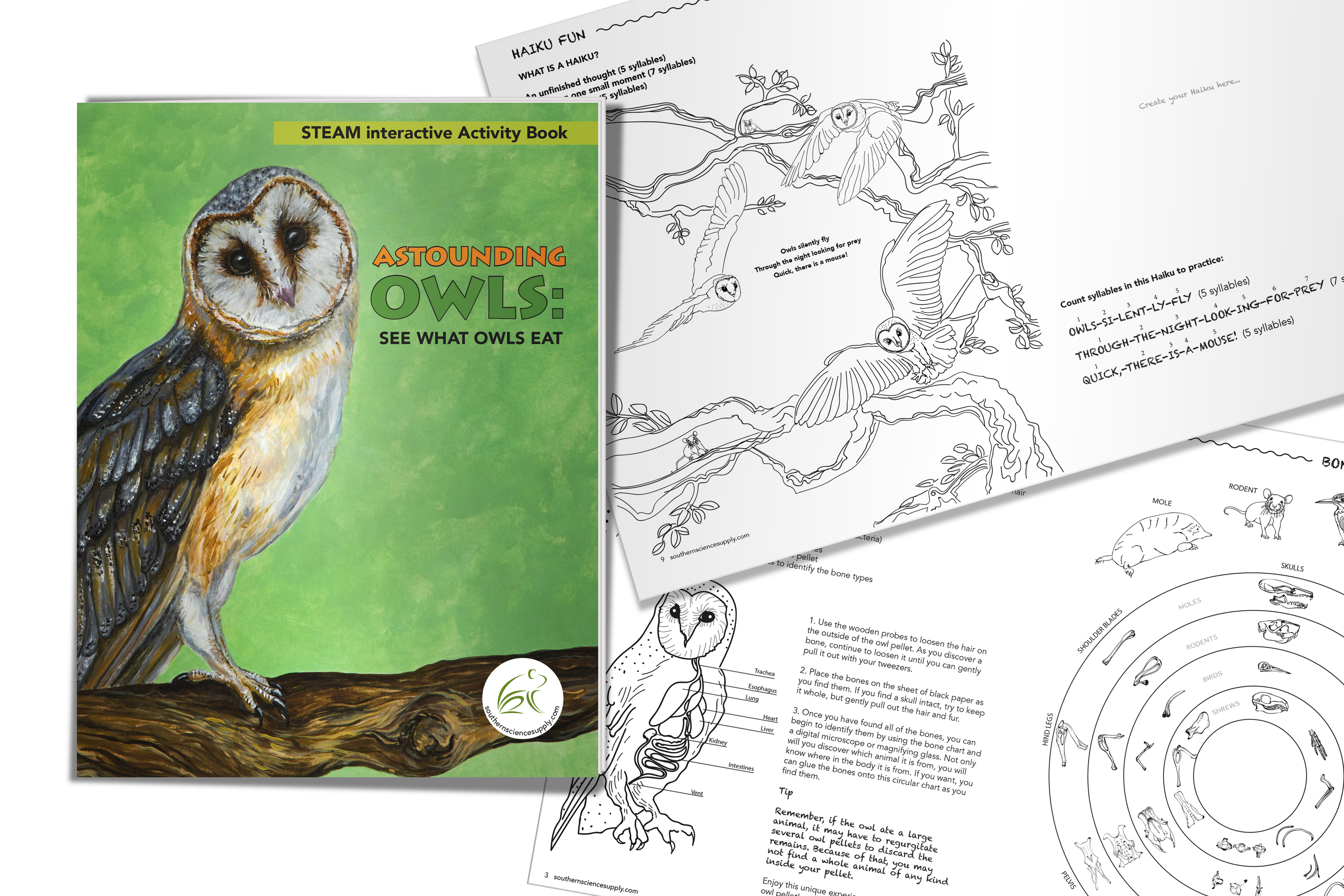Astounding Owls See What Owls Eat