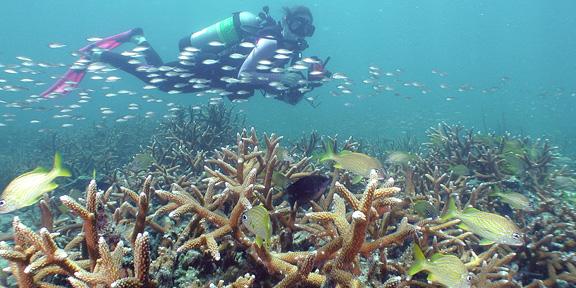 Pompano Drop Off  South Florida Diving Headquarters