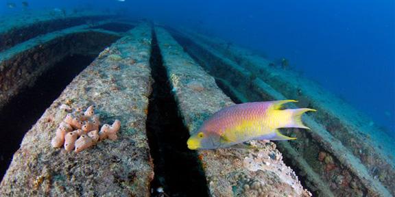 sea emperor south florida