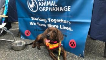 Petco Voorhees Animal Orphanage