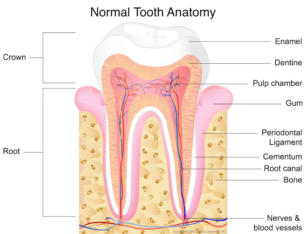 hight resolution of tooth trauma and nerve damage to teeth