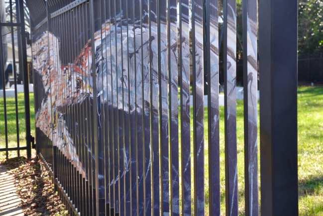 Hawk.on.Fence.Elizabeth.By.WallPoemProject