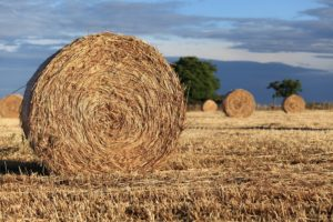 Horse Quality Hay | Southside Feed