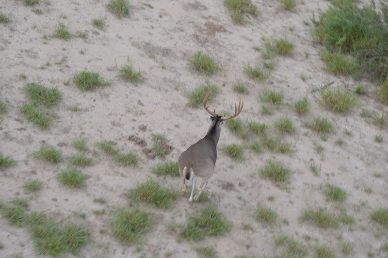 Wildlife mgmt 1