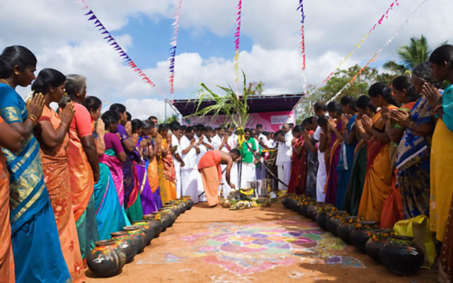 Thai Pongal celebration in Tamilnadu