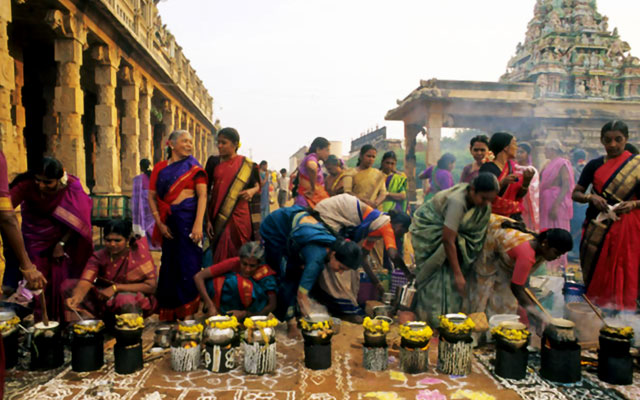 Women Cooking Rice and Milk Dish, in Tamil Nadu Temples to celebrate the Pongal festival