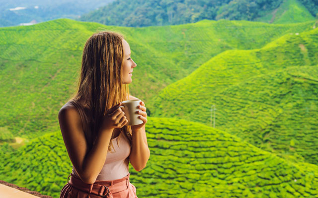 A young foreign women holding a tea cup and admiring the view of tea garden in Munnar