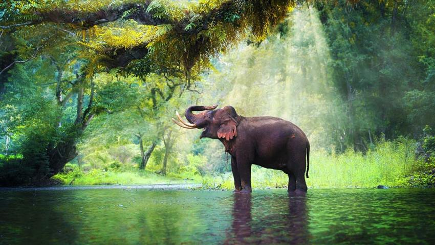 A wild elephant in the beautiful forest of Kerala