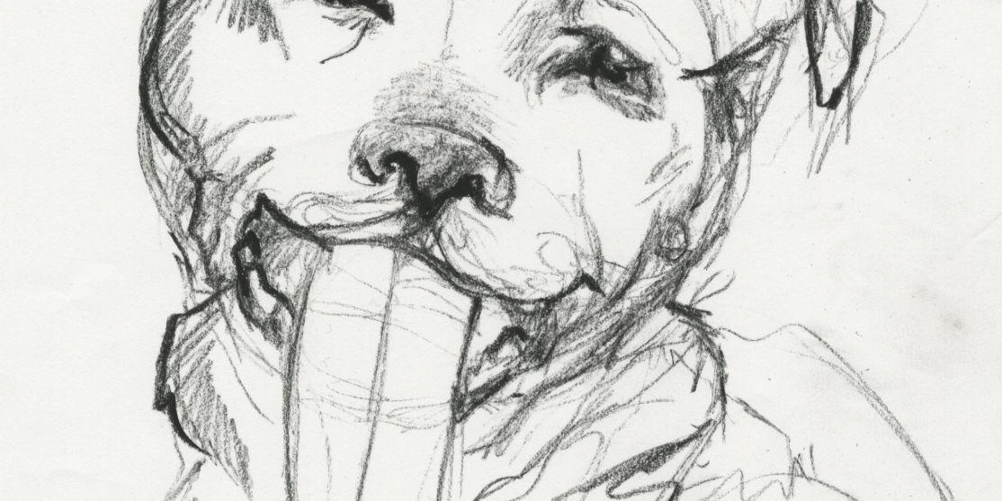 Art for Animals • Southwestern University