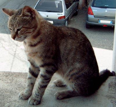 Nella foto un gatto affacciato su un davanzale a Gasperina.