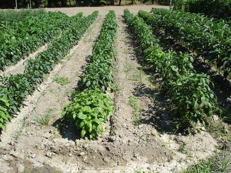 Liberi da OGM