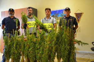 Catanzaro – Sequestrate oltre 5.700 piante di marijuana