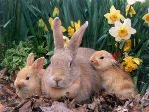 Il tratto Gagliato Argusto e i conigli