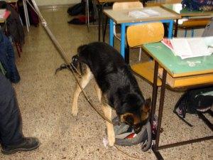 Controllo antidroga dei carabinieri tra i banchi di scuola a Catanzaro