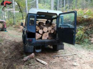 Tagliano alberi in zona sottoposta a vincolo paesaggistico, arrestati dai carabinieri