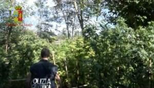 Rinvenuta dalla Polizia vasta piantagione, 32enne arrestato