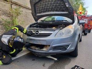 Piccolo cane investito da un'auto, soccorso dai Vigili del Fuoco