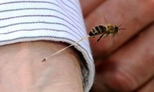 Punto da una grande vespa va in choc anafilattico e muore