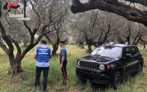 Sequestrato olio extra vergine d'oliva e sanzionato titolare azienda agricola