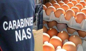 Salmonella enteritidis nelle uova fresche da allevamento a terra, allerta del Ministero della Salute