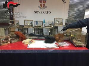 Controlli antibracconaggio nei comuni di Soverato e di Davoli, sequestri e denunce