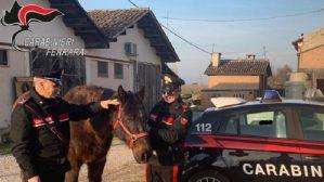 Truffa su acquisto cavalli, otto persone denunciate