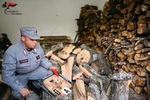 Rubano legna da un terreno demaniale, due fratelli denunciati