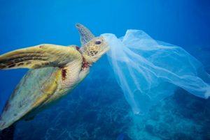 Depositata istanza per l'abolizione della plastica nel Comune di Catanzaro