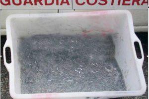 Sequestrati a Soverato 20 kg di novellame di sarda, 4000 euro di multa