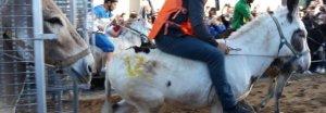 L'asino di Gasperina Sabatino vince il palio del Casale a Camposano