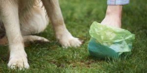 Codacons: Una banca dati con il dna dei cani per multare gli incivili