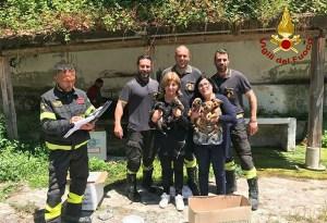 Cuccioli caduti in una scarpata salvati dai vigili del fuoco