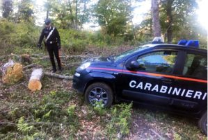 Badolato – Ruba legna da un terreno comunale, 43enne arrestato