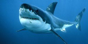 La Reunion, squalo uccide surfista 30enne