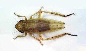 Scoperta una nuova specie di insetto nel Parco Nazionale dell'Aspromonte
