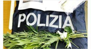 Coltivava marijuana tra i pomodori, ristoratore denunciato