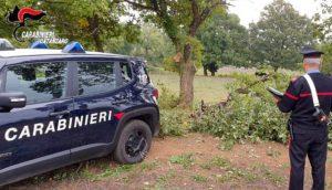 Chiaravalle – Due 18enni sorpresi a tagliare alberi di quercia in terreno privato, arrestati